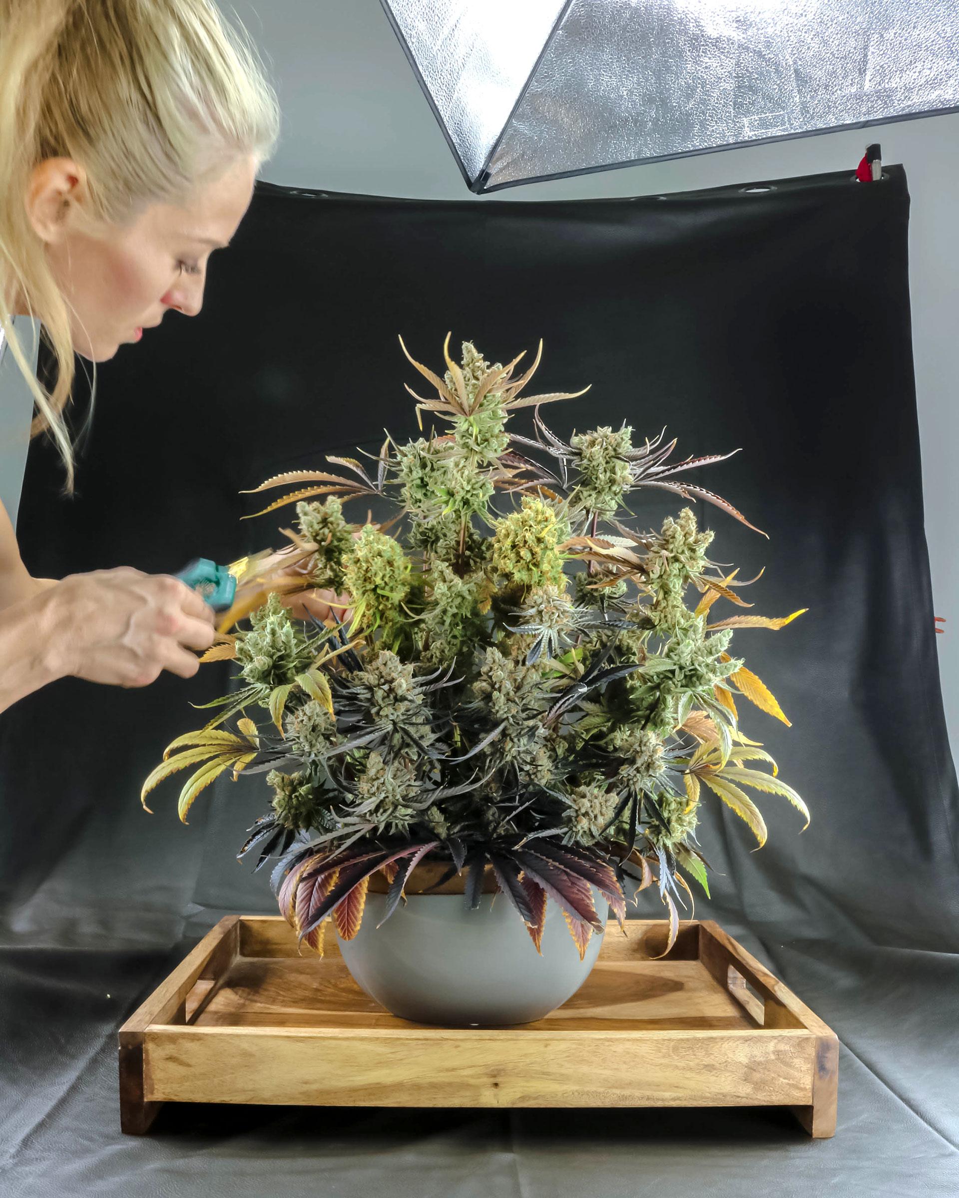 Die Fotografin Asia Taber bei der Vorbereitung eines Blütenarrangements aus Cannabis.